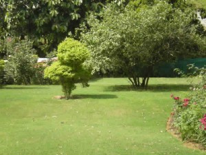 nice location natural greenery beautiful farm house available on rent in gurgaon
